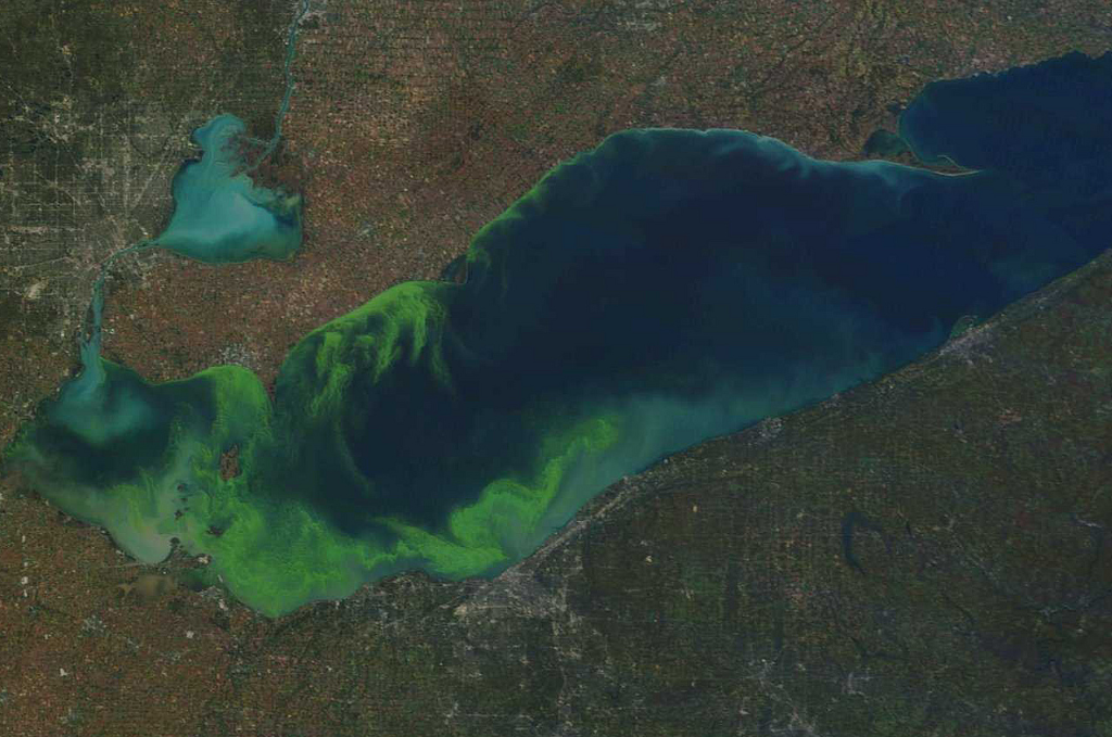lake erie algae, eutrophication, phosphates in water, phosphate remover, remove phosphates